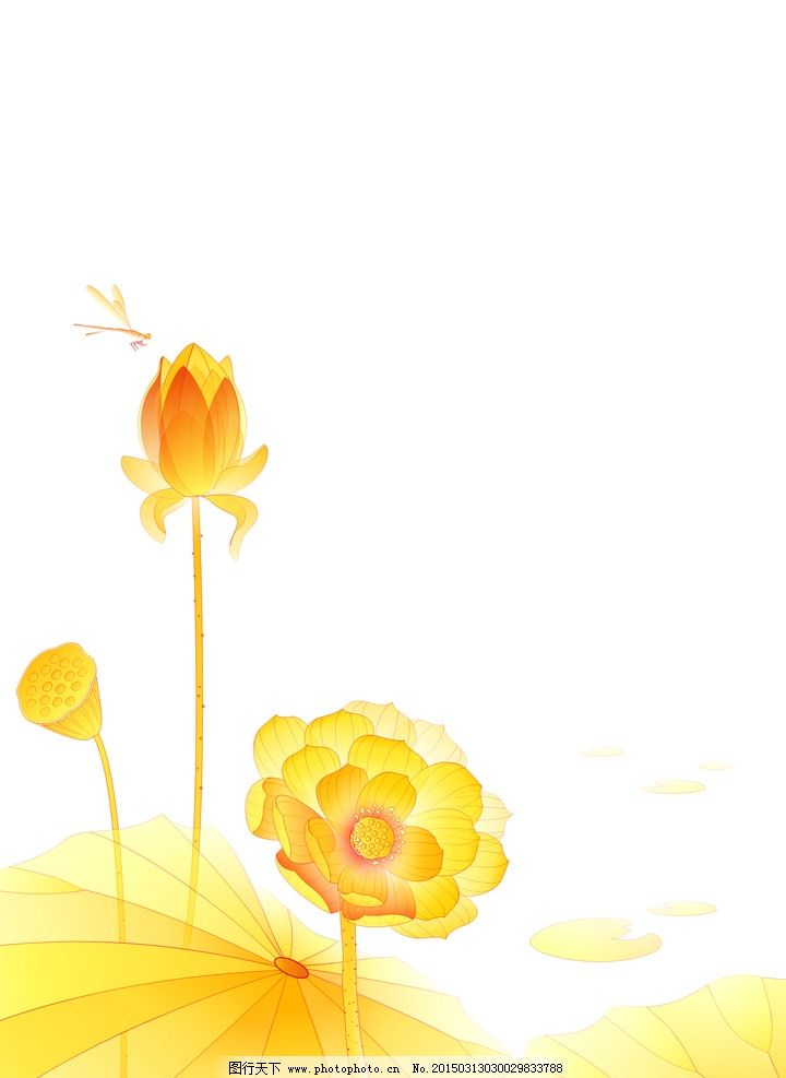 金色荷花图片