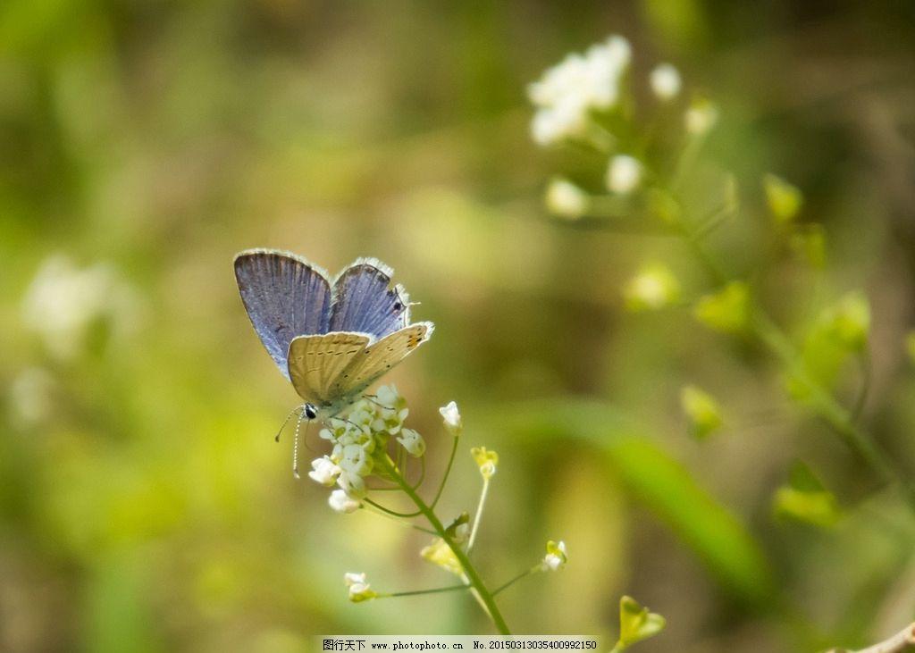 蝴蝶是卵生动物