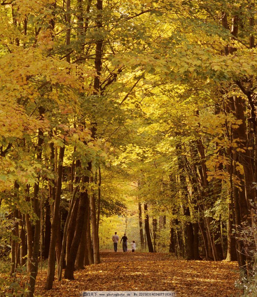 秋景 树林 小路 唯美 落叶 自然风景 摄影 自然景观 自然风景 100dpi
