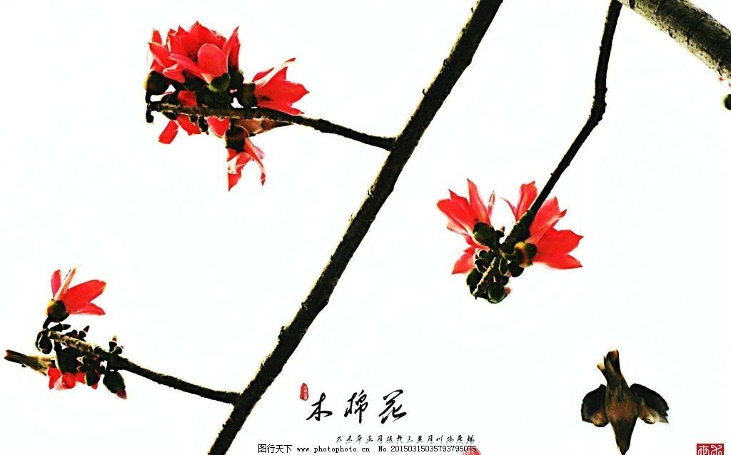 木棉树 木棉花 落叶大乔木 红色 植物 树枝 花朵 木棉花 摄影 生物