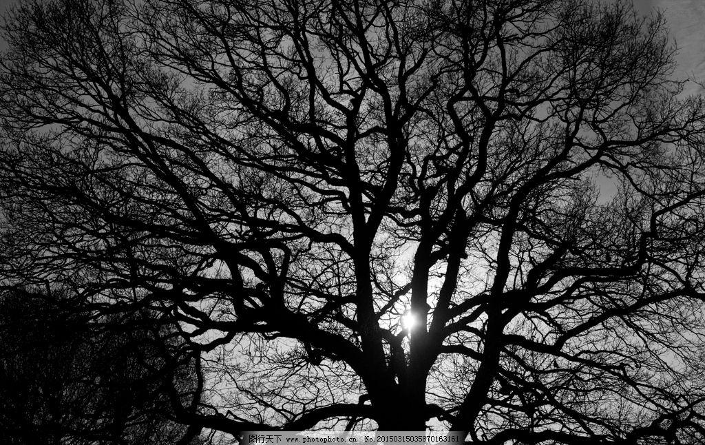 树枝 树干 黑白 黑白装饰画 太阳 阳光 桌面 背景 壁纸 唯美
