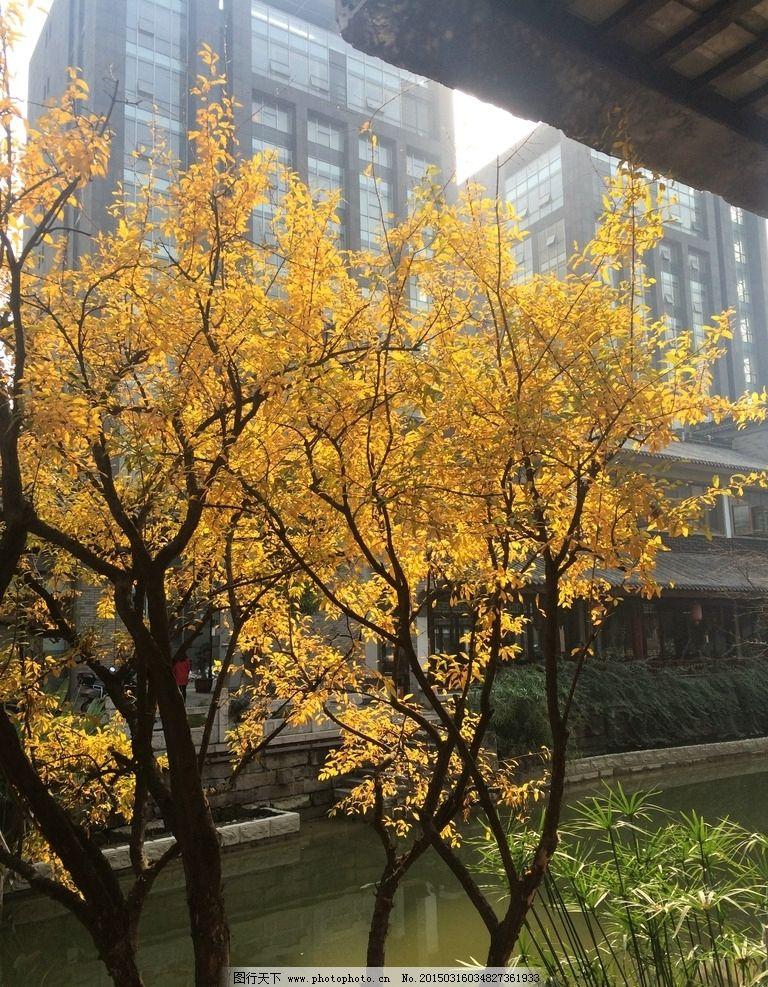花树 阳光 秋天 秋叶 秋水 天空 树叶 叶子 黄叶 摄影
