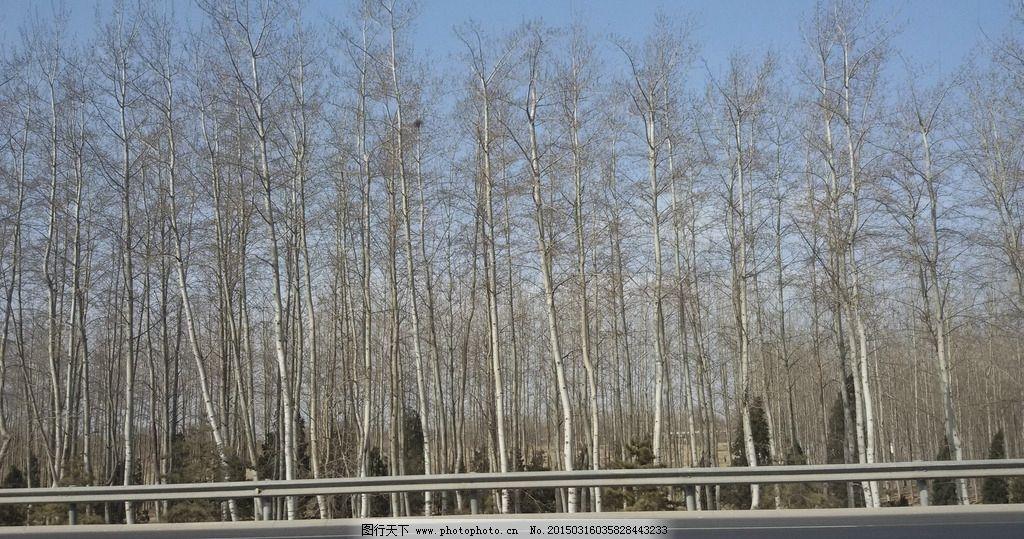树林 冬日树林 冬天树林 小树林 北方树林 花 草 树木 摄影 生物世界