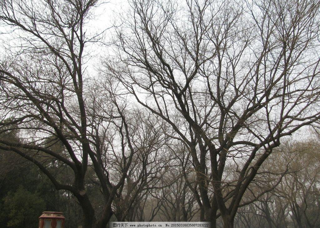 初春 风景 自然景观 植物 树木 绿化景观 园林绿化 枯树枝 树木树叶