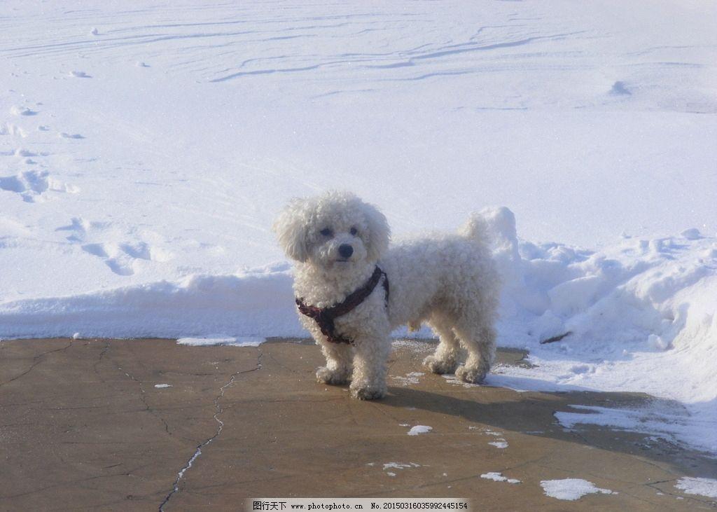 雪地里的狗狗图片