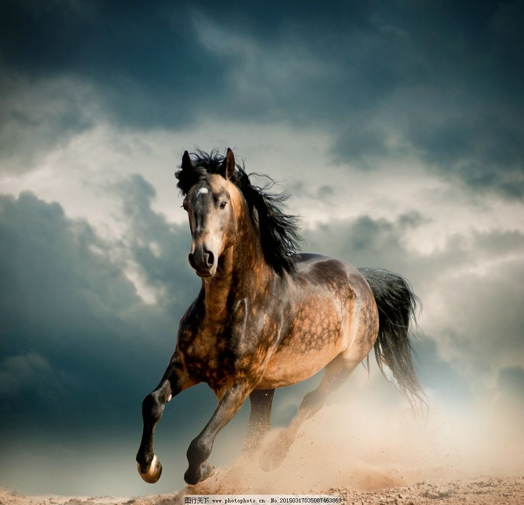 唯美 动物 可爱 野生动物 奔驰 飞奔 驰骋 炫酷 马 骏马 千里马 摄影