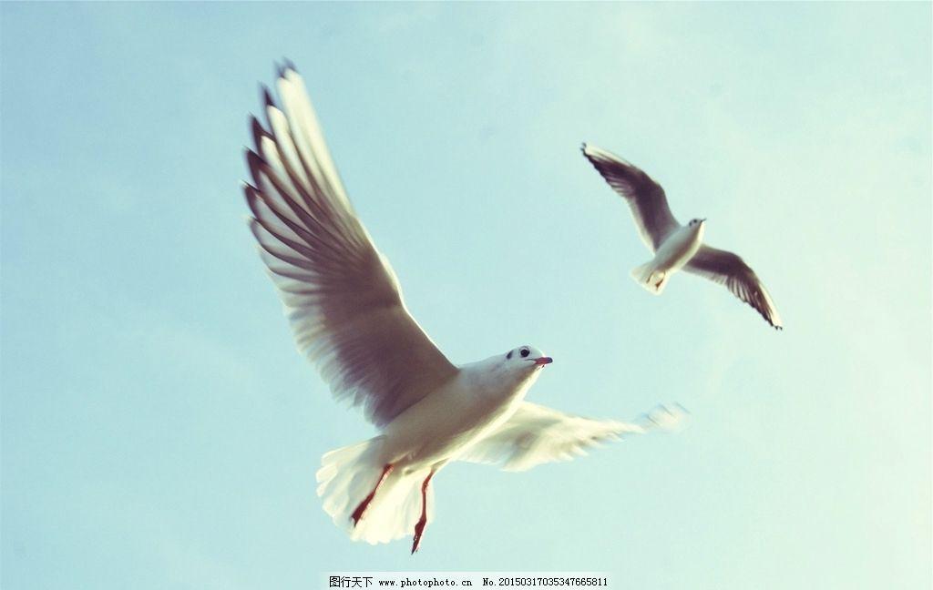 海鸥 飞翔 天空 翱翔 鸟 借鉴分享素材 摄影 生物世界 鸟类 72dpi jpg