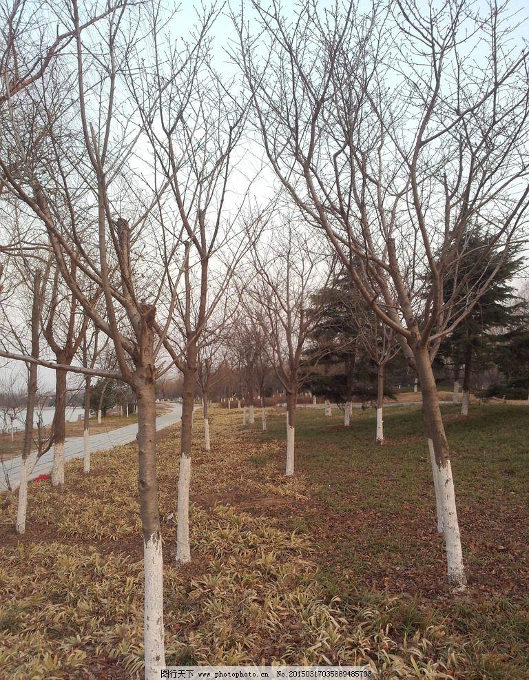 公园枯树 冬天的树 一株大树 树木 天空 干枝 公园一角 冬天公园
