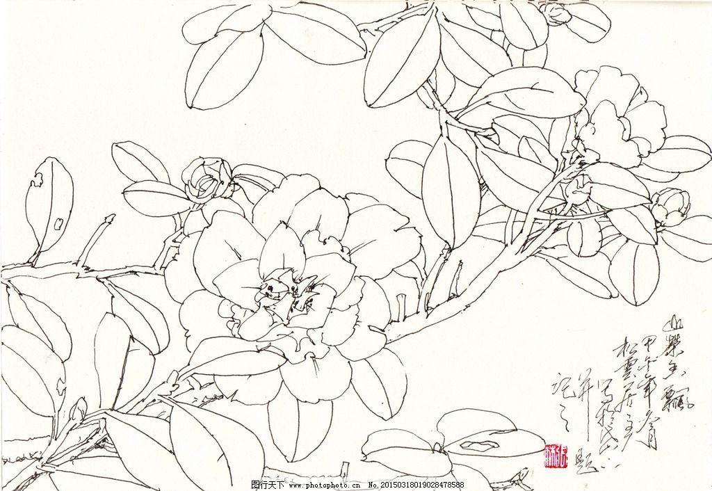茶花 线描 白描 写生 花卉 国画花鸟 设计 文化艺术 绘画书法 551dpi