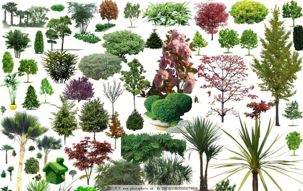 园林景观素材 植物素材图片