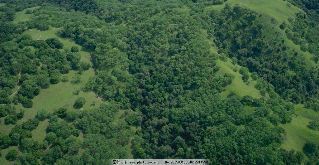 草地 鸟瞰 绿化 绿色 森林  摄影 自然景观 自然风景 72dpi jpg