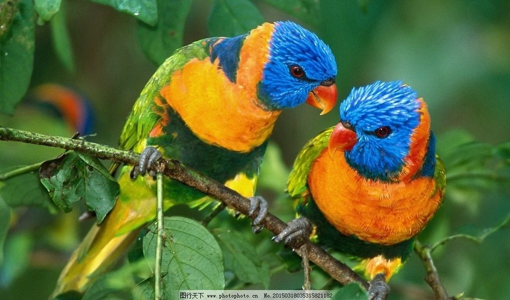 鹦鹉水彩笔简笔画彩色