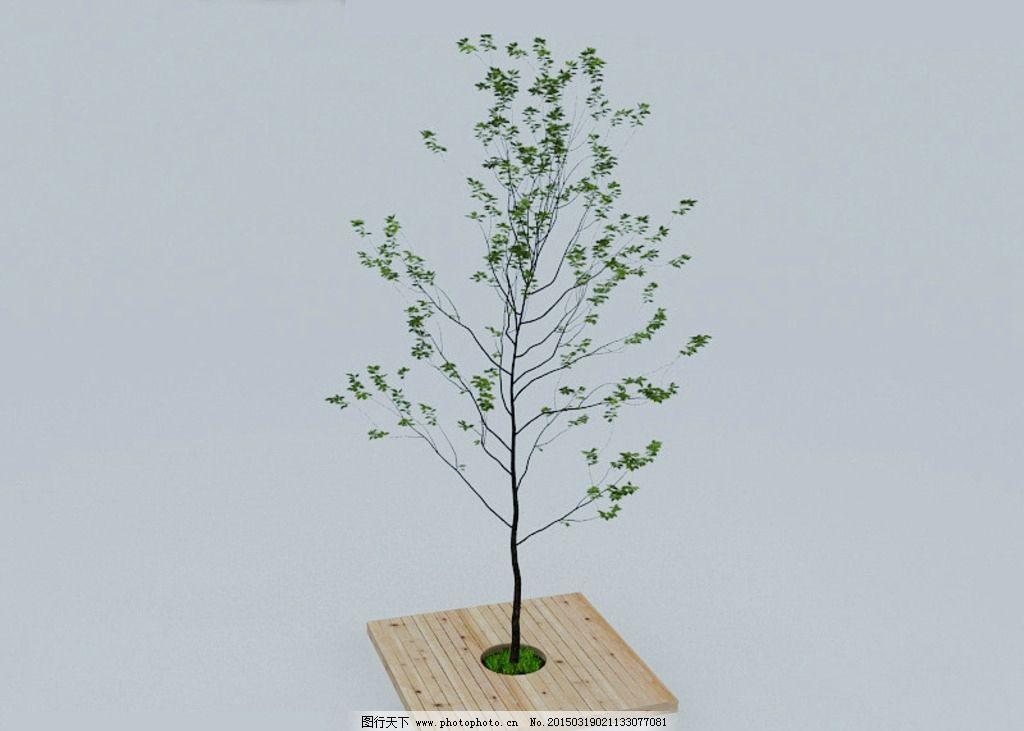 盆栽 树木 环境树木 草丛 室外模型 源文件 室内模型