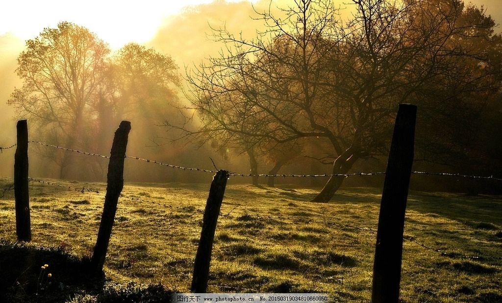 黄昏 树枝 秋景 风景 大树 金秋 植物 自然 秋天风景 树木