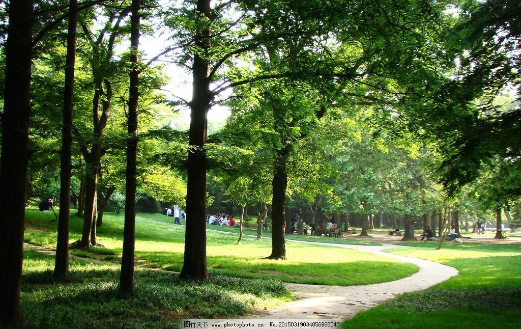 城市公园 城市森林 城市绿地 休闲 放松 城市绿肺 氧吧 摄影 自然景观