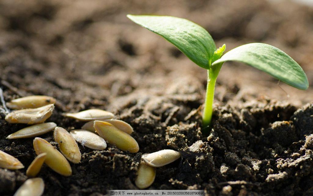 树苗 成长的幼苗 幼苗 小树苗 发芽 小苗 新生命 泥土 培育 土壤 树木