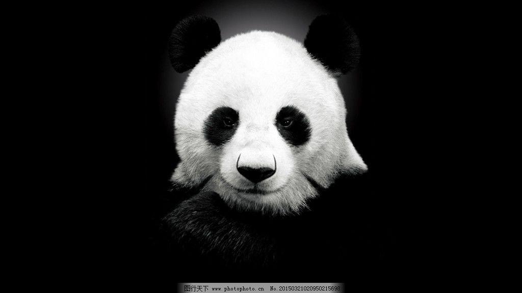 黑白熊猫个性壁纸背景