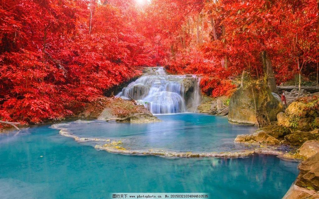 大��jk9�fyl#��l��(_红叶流水 秋景 风景 大树 金秋 植物 自然 秋天风景 树木 风光