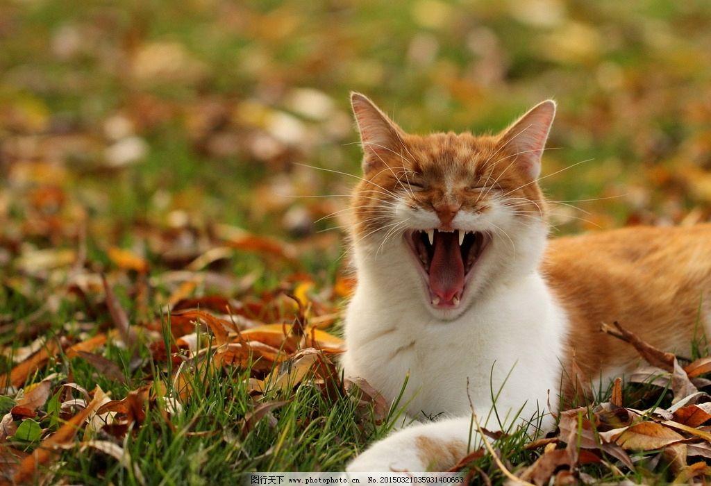 小猫咪 淘气小猫咪 小猫咪图 小猫咪图片 顽皮小猫咪 花朵 小花 动物