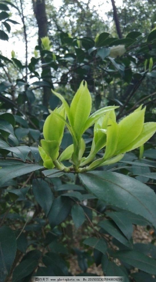 树木新芽图片