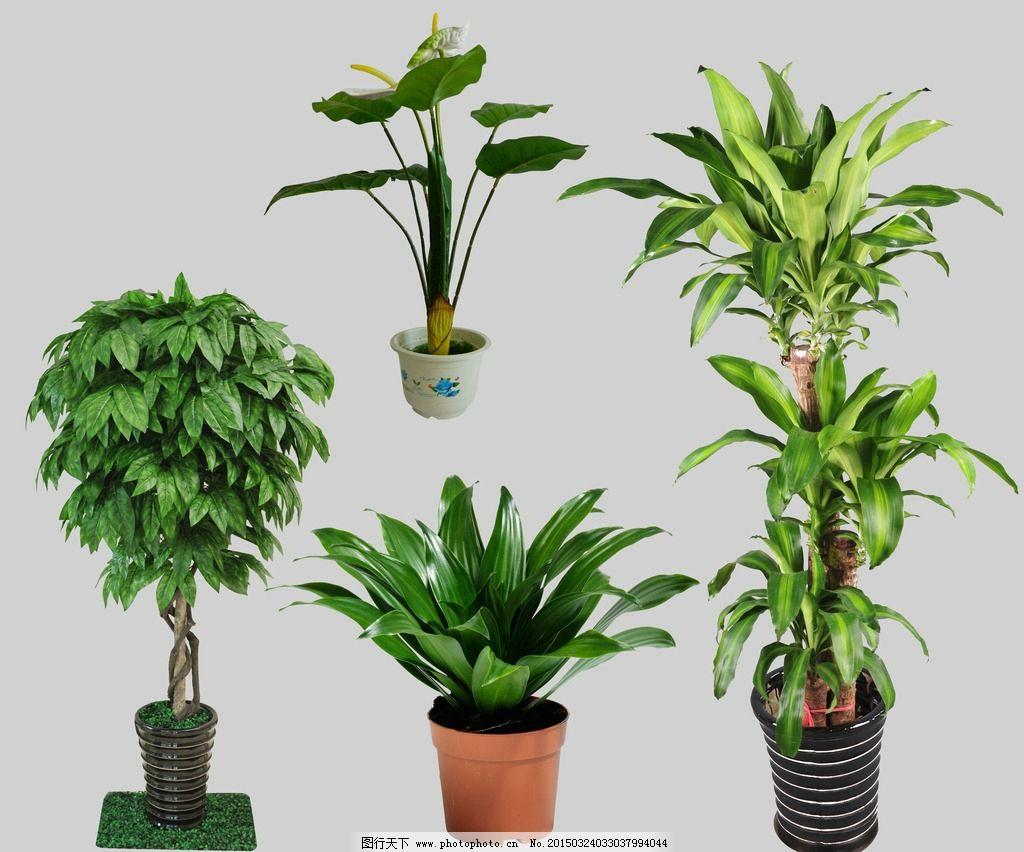 盆栽 花卉 绿植 盆景 紫色花 盆栽大全 盆栽植物  设计 psd分层素材
