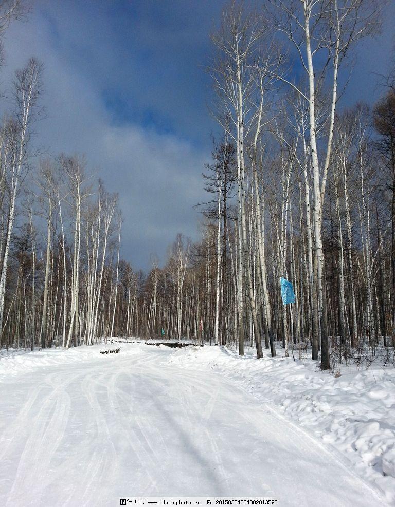 雪地中的白桦树图片