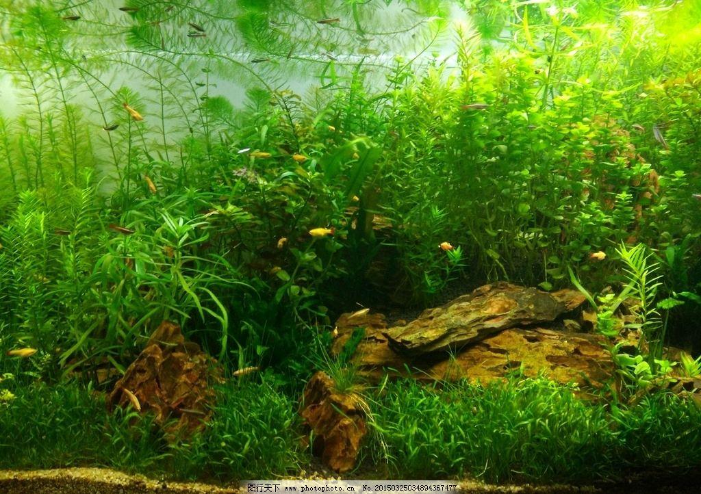 水下景观 微景观 鱼 水草 鱼缸  摄影 自然景观 自然风景 72dpi jpg