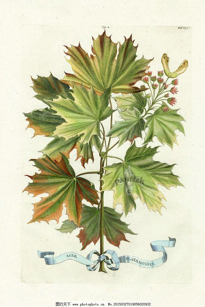 绿色 树枝 好看 小清新 自然 设计 文化艺术 绘画书法 360dpi jpg