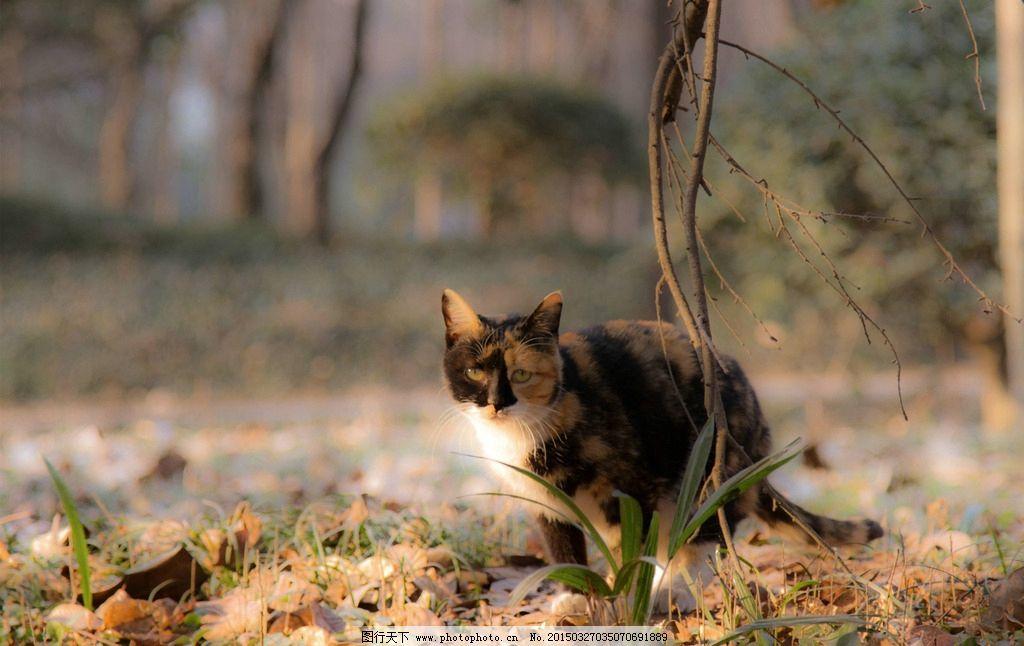 流浪猫 落叶 秋 摄影 宠物 摄影 生物世界 野生动物 240dpi jpg