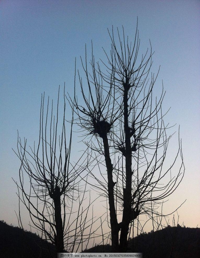 湖南风光 湘西风景 湘西 大树 树木 树 摄影 生物世界 树木树叶 72dpi