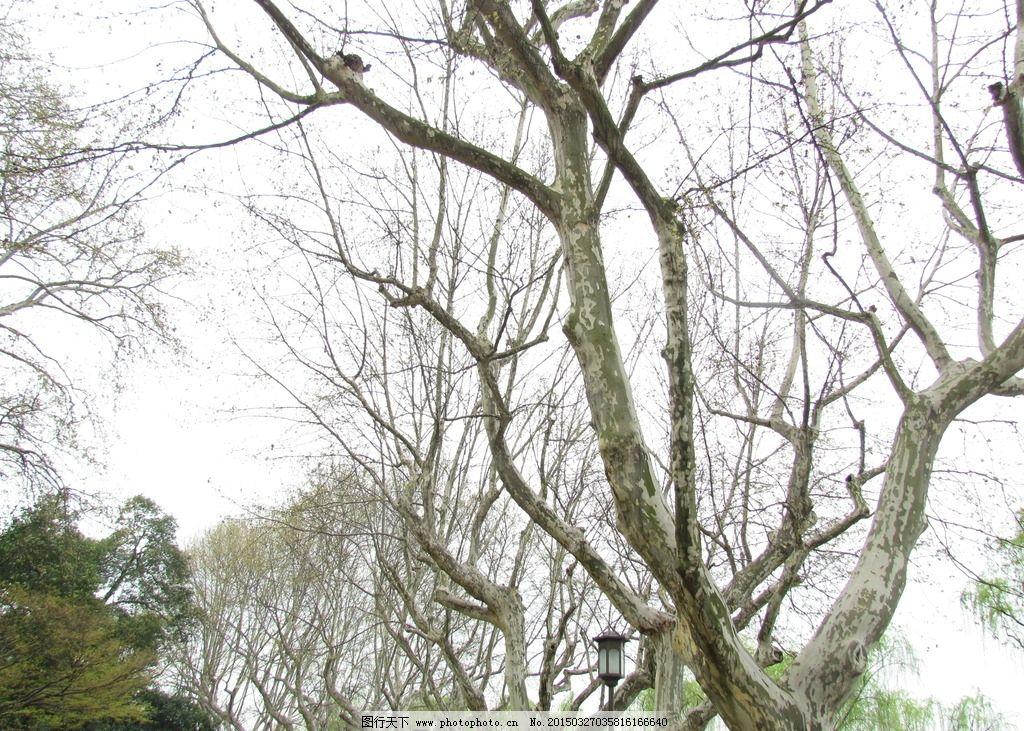树木 枯枝 枝条 植物 树枝 摄影 生物世界 树木树叶 180dpi jpg