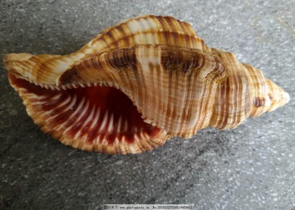 海螺图片图片