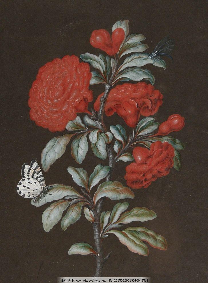 盛开 红色山茶花