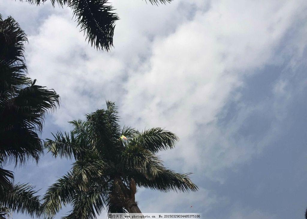 天空 蓝天 白云 云 椰子树 风景 阳光 风景照 摄影 自然景观 山水风景