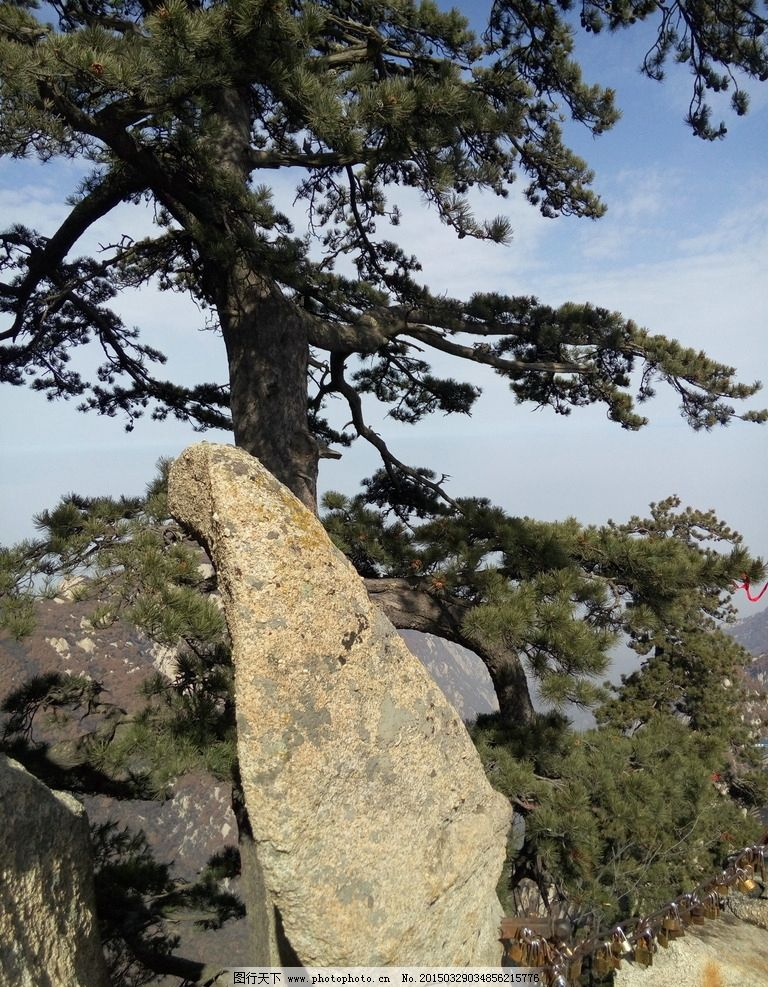 西安华山 岩石 松树 蓝天 白云 悬崖峭壁 摄影 自然风光
