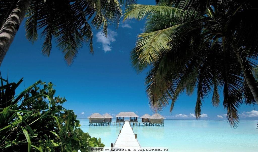 海边椰子树图片