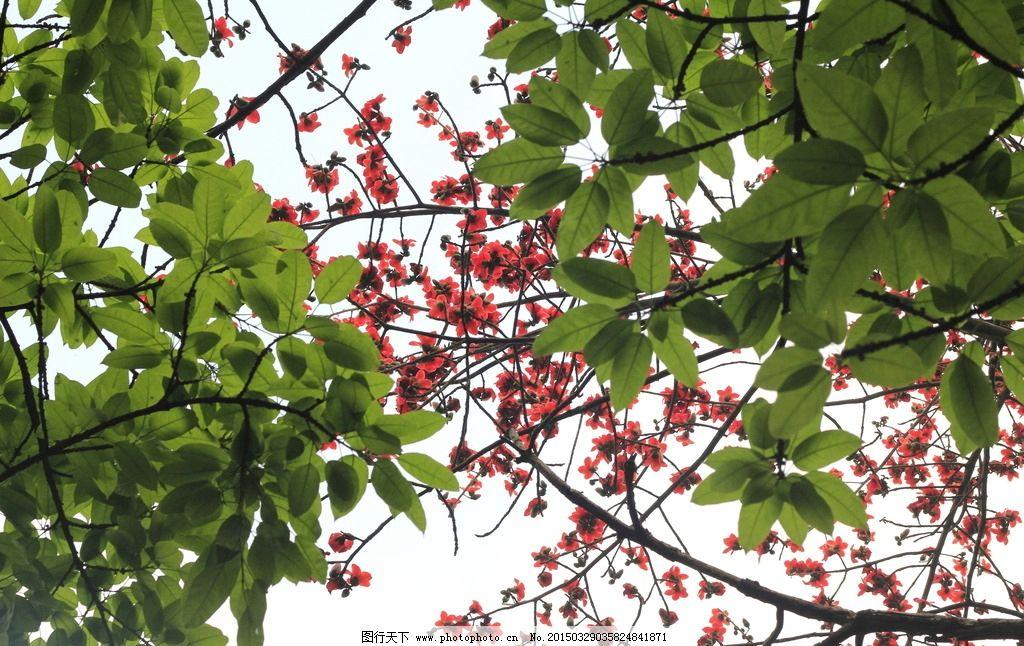 绿叶红花图片_树木树叶_生物世界_图行天下图库