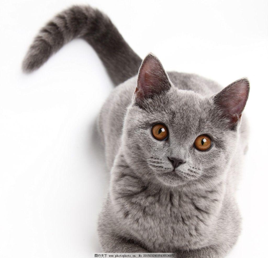 可爱花猫图片大全