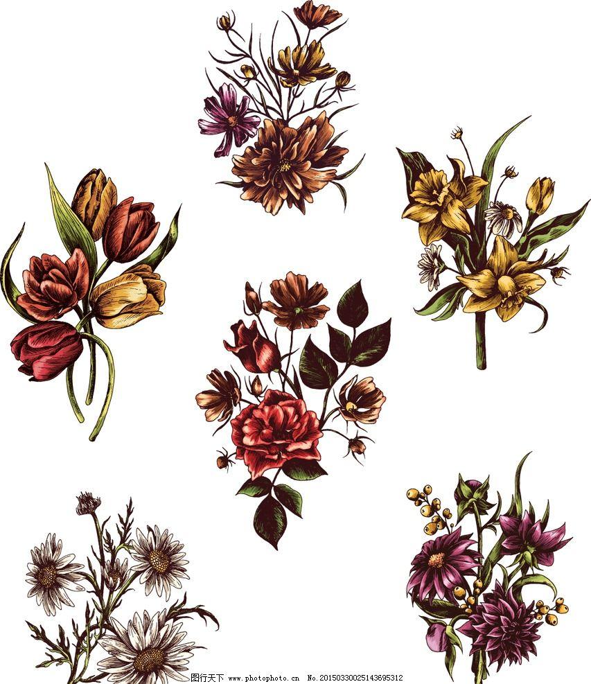 手绘花卉 花朵 鲜花 菊花 玫瑰花 百合花 花卉插图 设计 矢量 eps