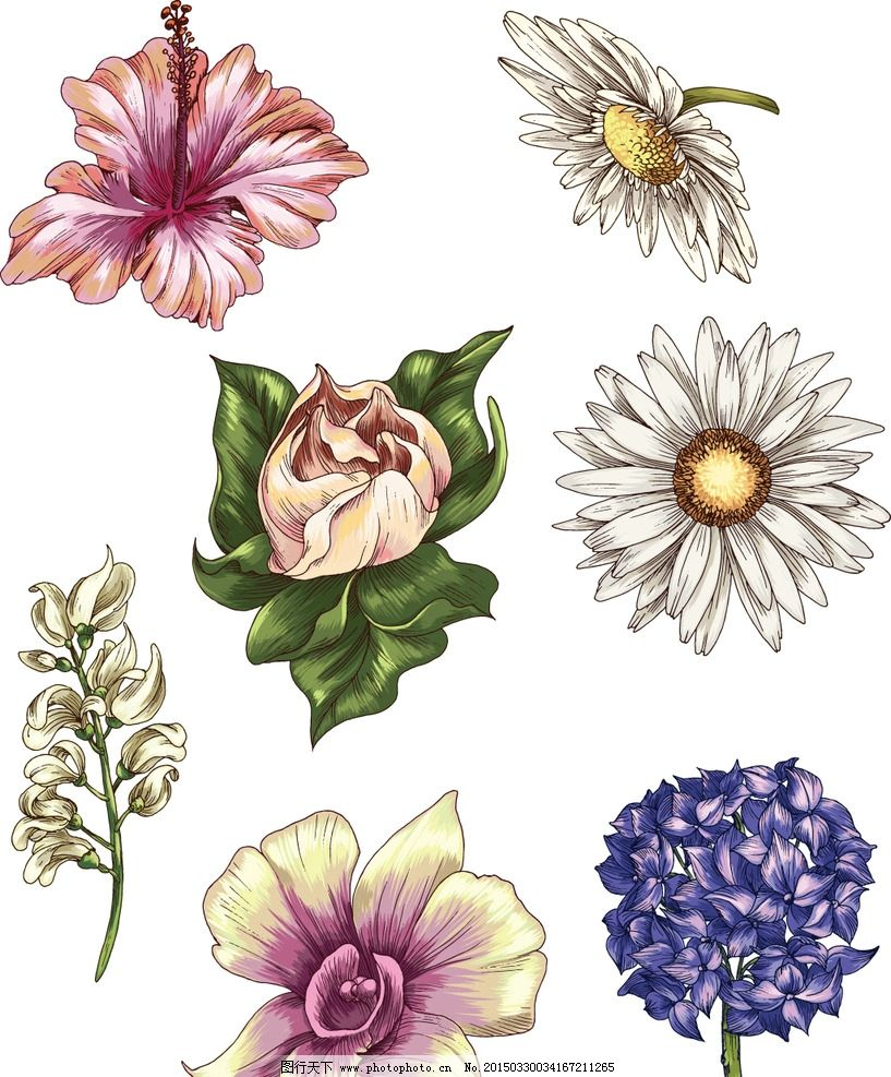 手绘花卉图片_自然风景