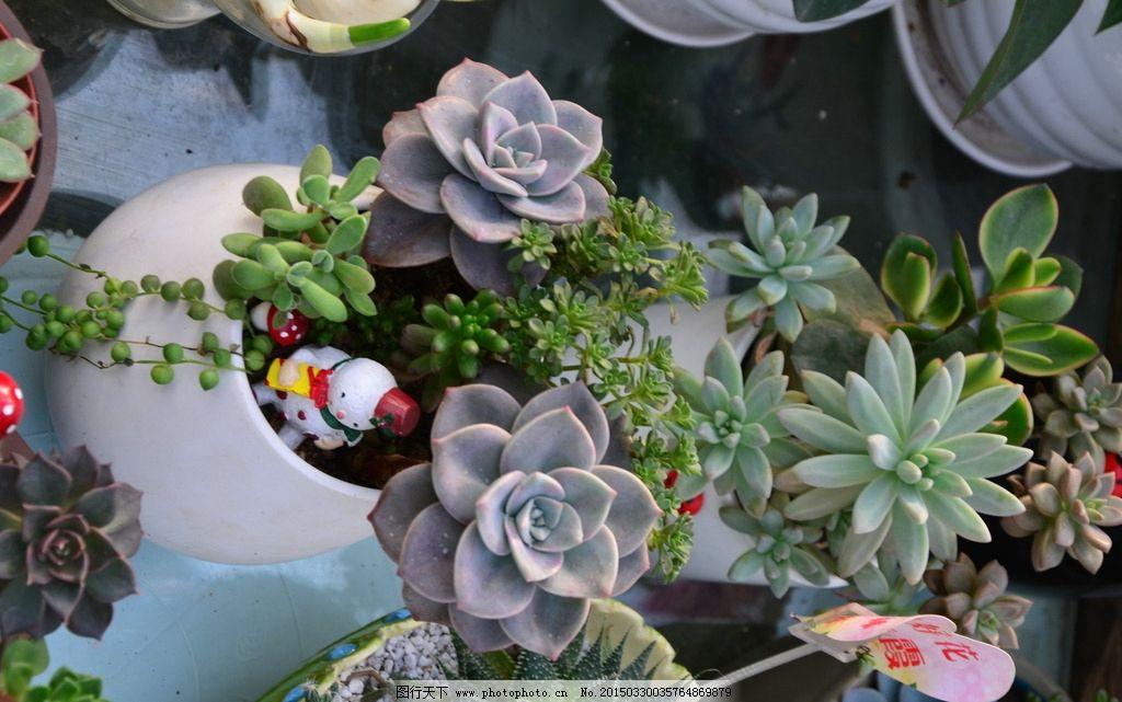 多肉植物 花卉图片