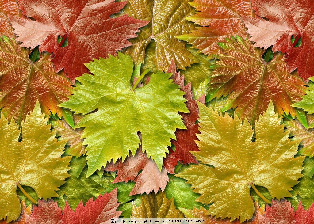 树叶 叶子 枫叶 植物 落叶 摄影 生物世界 树木树叶 300dpi jpg