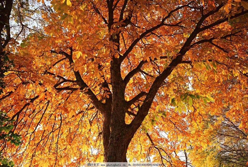 奥林匹克公园树木 唯美 风景 风光 旅行 自然 秦皇岛 秋景 秋天