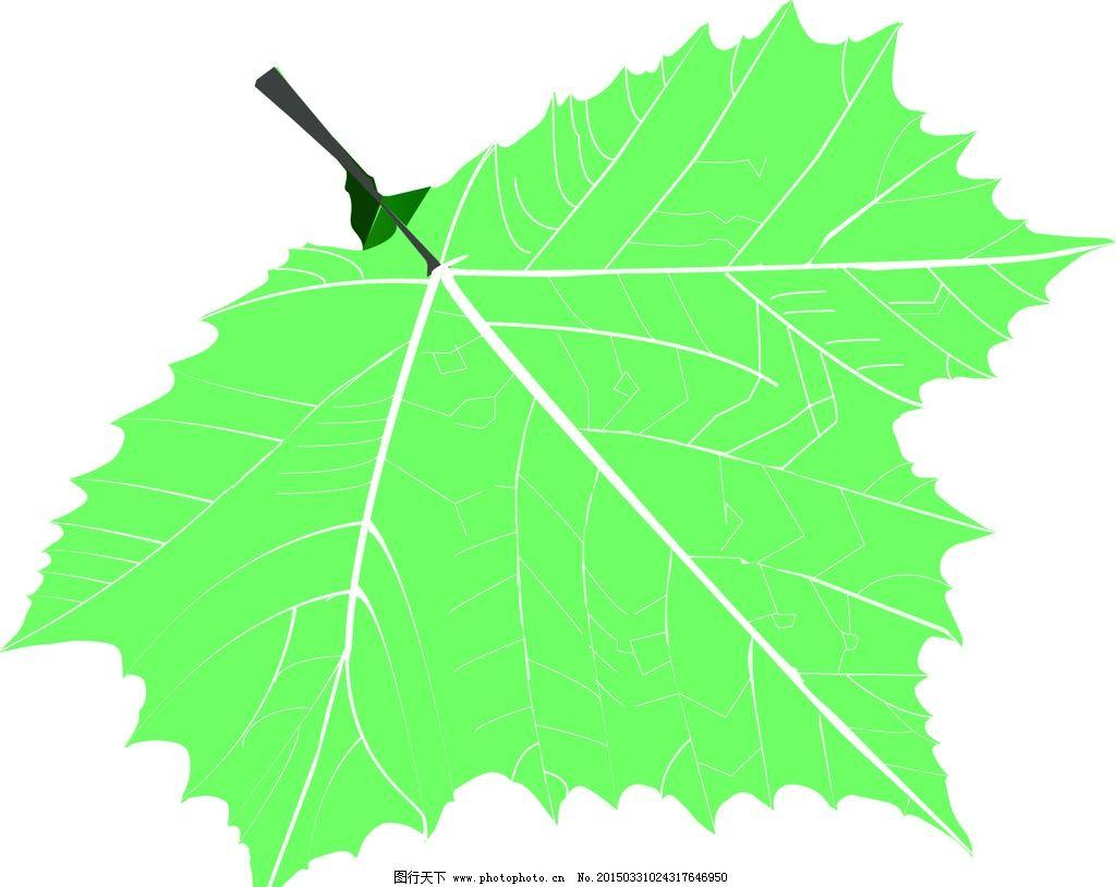 梧桐树叶矢量图图片