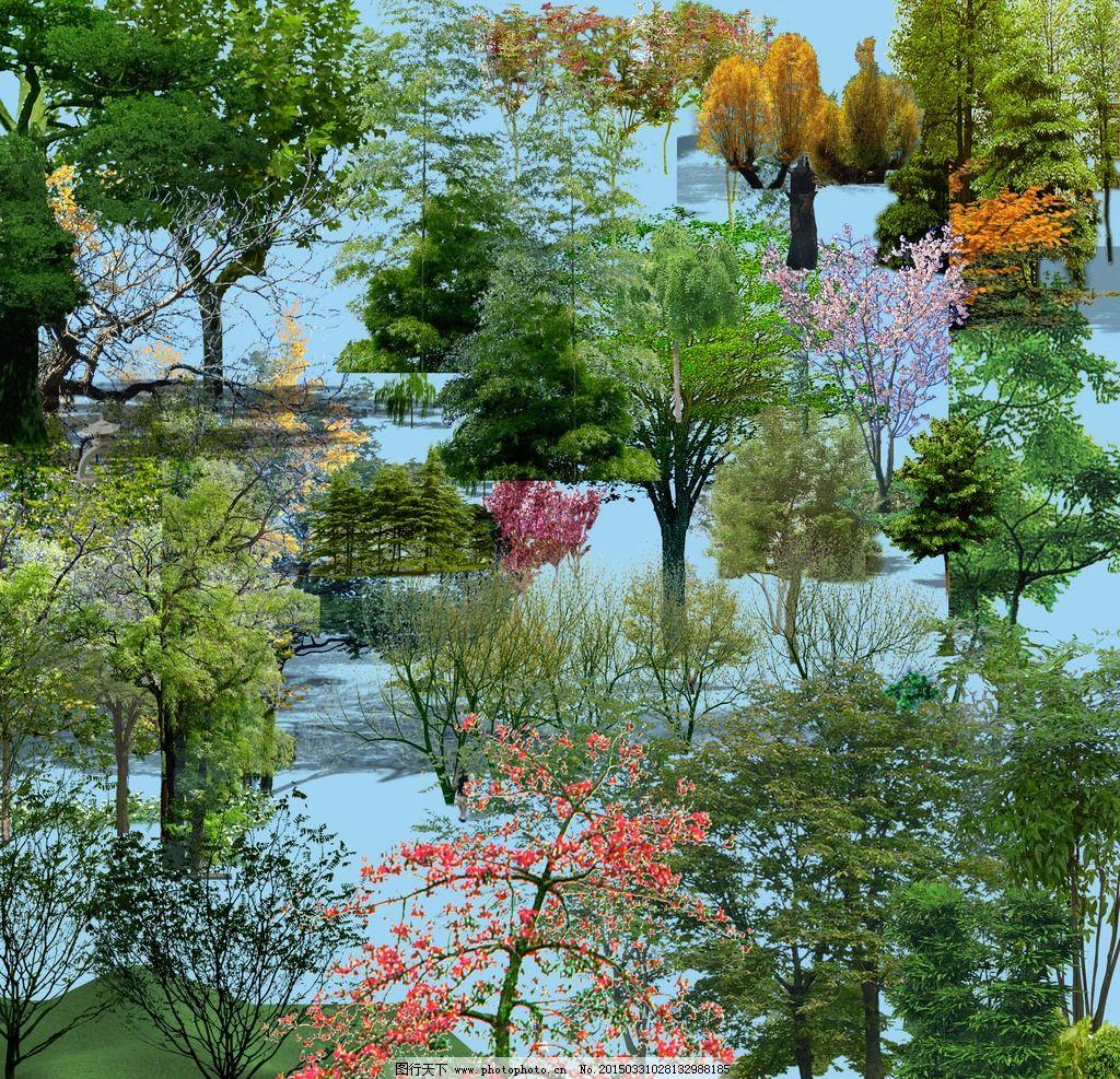 景观设计 景观素材 乔木素材 景观植物 psd素材 植物设计 立体植物