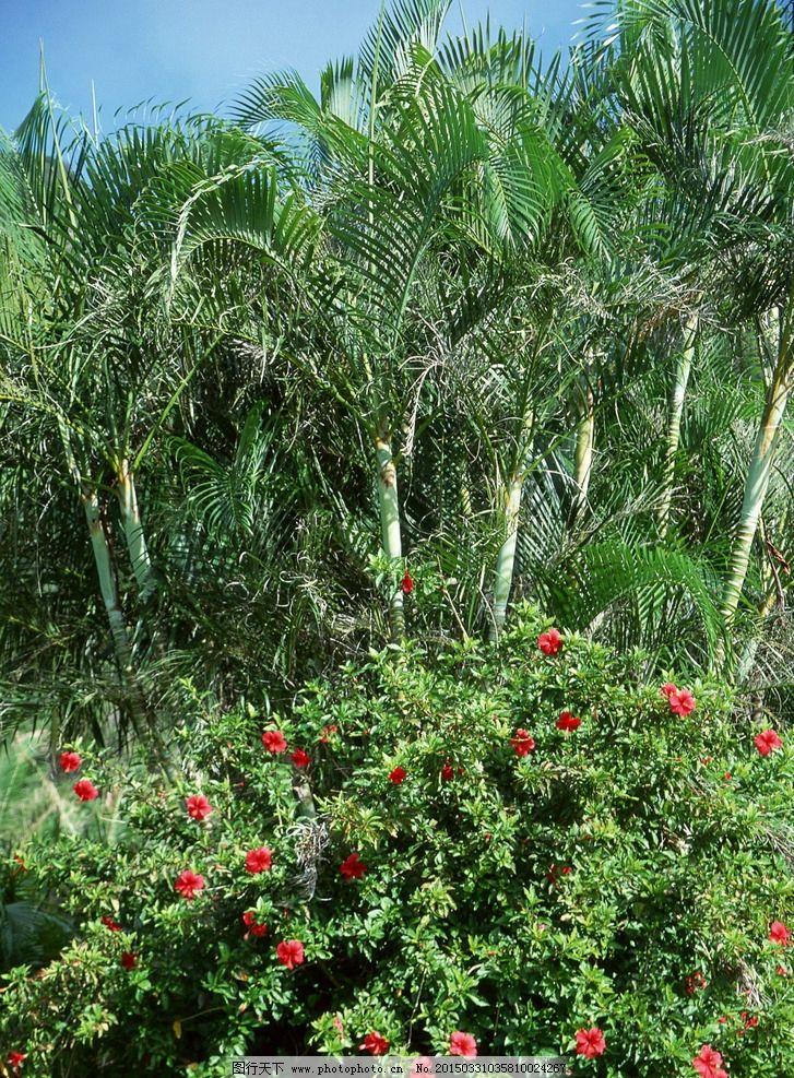 大海风光 蓝色风景 植物 花朵 40大海与小岛 摄影 生物世界 树木树叶